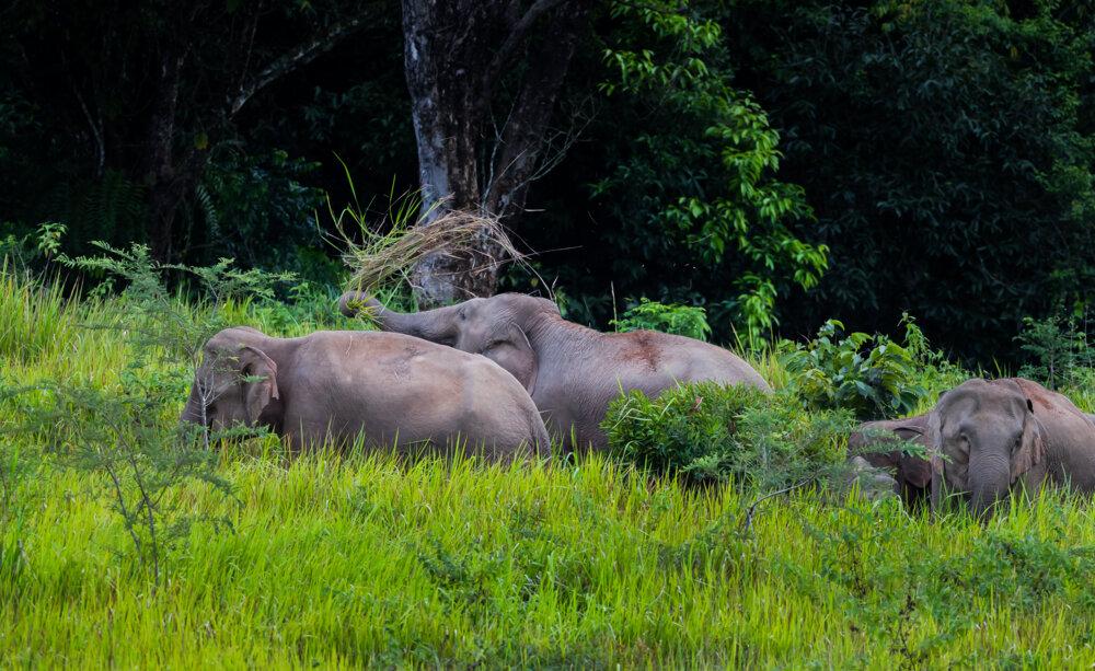 encounter wild elehants on a khao yai family trip with Backyard Travel